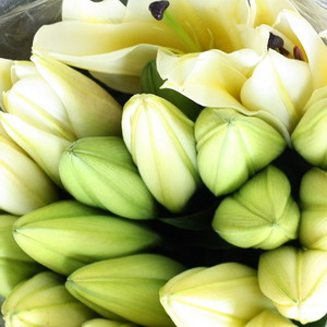 Fresh Cut flowers Lily-Yellow King