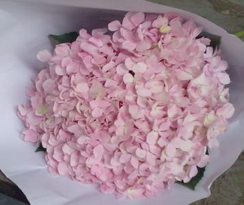 Fresh Cut Flowers Hydrangeas-07
