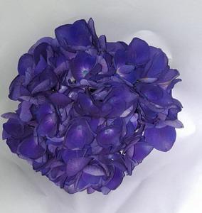 Fresh Cut Flowers Hydrangeas-02