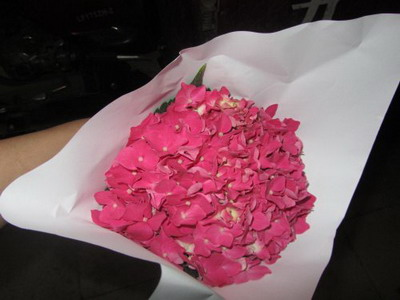 Fresh Cut Flowers Hydrangeas-10