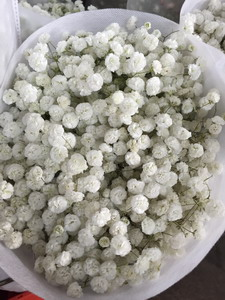 Baby's Breath Flower(Gypsophila)-10