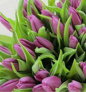 Fresh Cut Flower-Tulip-02