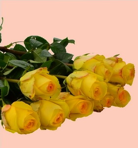 Fresh Cut Flower Rose -Yellow Crown
