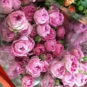 Fresh Cut Flowers-Spray Roses-09