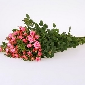 Fresh Cut Flowers-Spray Roses-07