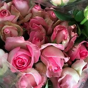 Fresh Cut Flowers-Spray Roses-03
