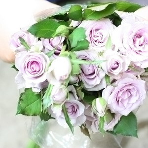 Fresh Cut Flowers-Spray Roses-04