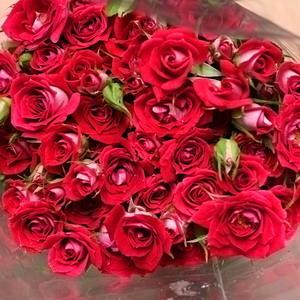 Fresh Cut Flowers-Spray Roses-01