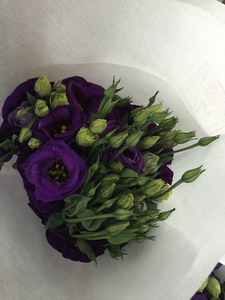 Fresh Cut Flower-Eustoma Flower-08