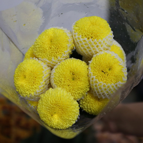 PingPong Chrysanthemum-02