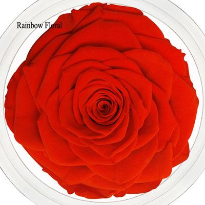 9-10CM Big Size preserved Rose head(1pcs-box)-15