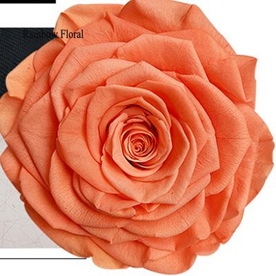 9-10CM Big Size preserved Rose head(1pcs-box)-07