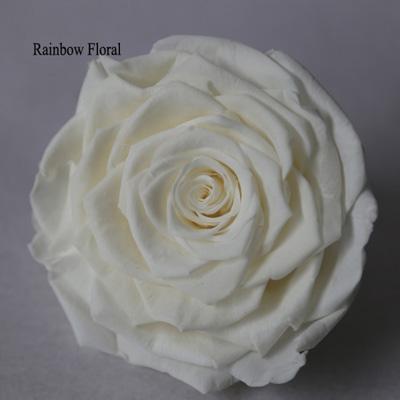 9-10CM Big Size preserved Rose head(1pcs-box)-16