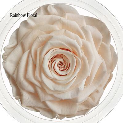 9-10CM Big Size preserved Rose head(1pcs-box)-13