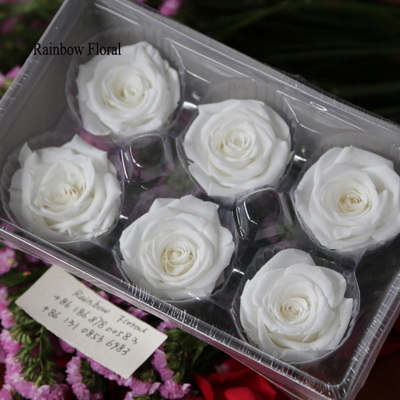 5-6CM (6pcs-box) Solid color preserved rose head-19