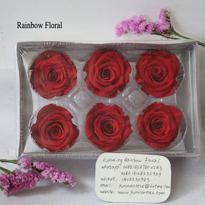 5-6CM (6pcs-box) Solid color preserved rose head-20