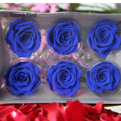 5-6CM (6pcs-box) Solid color preserved rose head-12