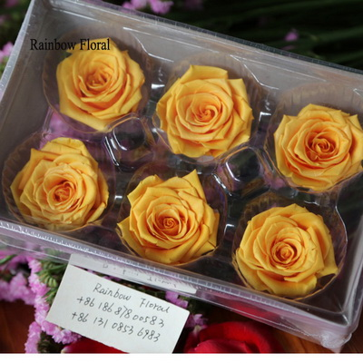 5-6CM (6pcs-box) Solid color preserved rose head-05