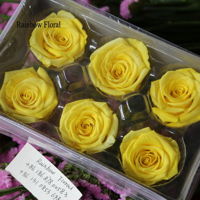5-6CM (6pcs-box) Solid color preserved rose head-04
