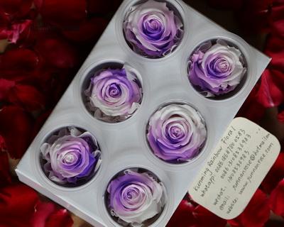 5-6CM(6pcs-box) Bi-color preserved rose head-13