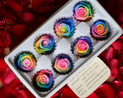 4-5CM (8pcs-box) Bi-color preserved rose head-03