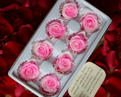 4-5CM (8pcs-box) Bi-color preserved rose head-02