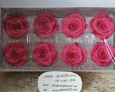 4-5CM (8pcs-box) Solid color preserved rose head-06