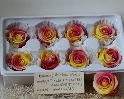 4-5CM (8pcs-box) Bi-color preserved rose head-11